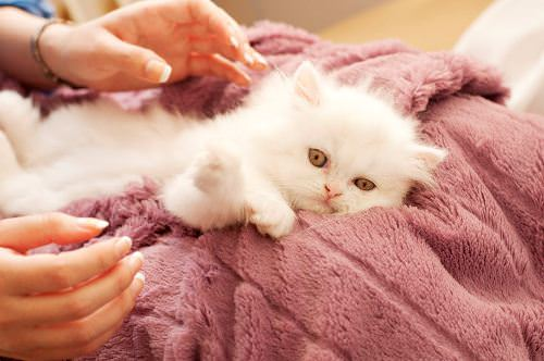 Pamper your beloved pet