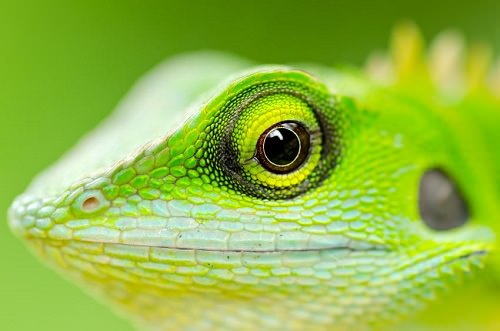 Reasons to Choose an Exotic Pet