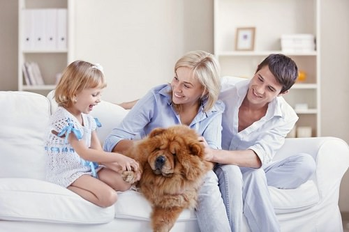 Smart Ways to Choose the Right Pet