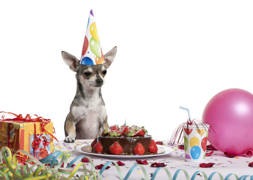 Surprises for Your Pet's Birthday
