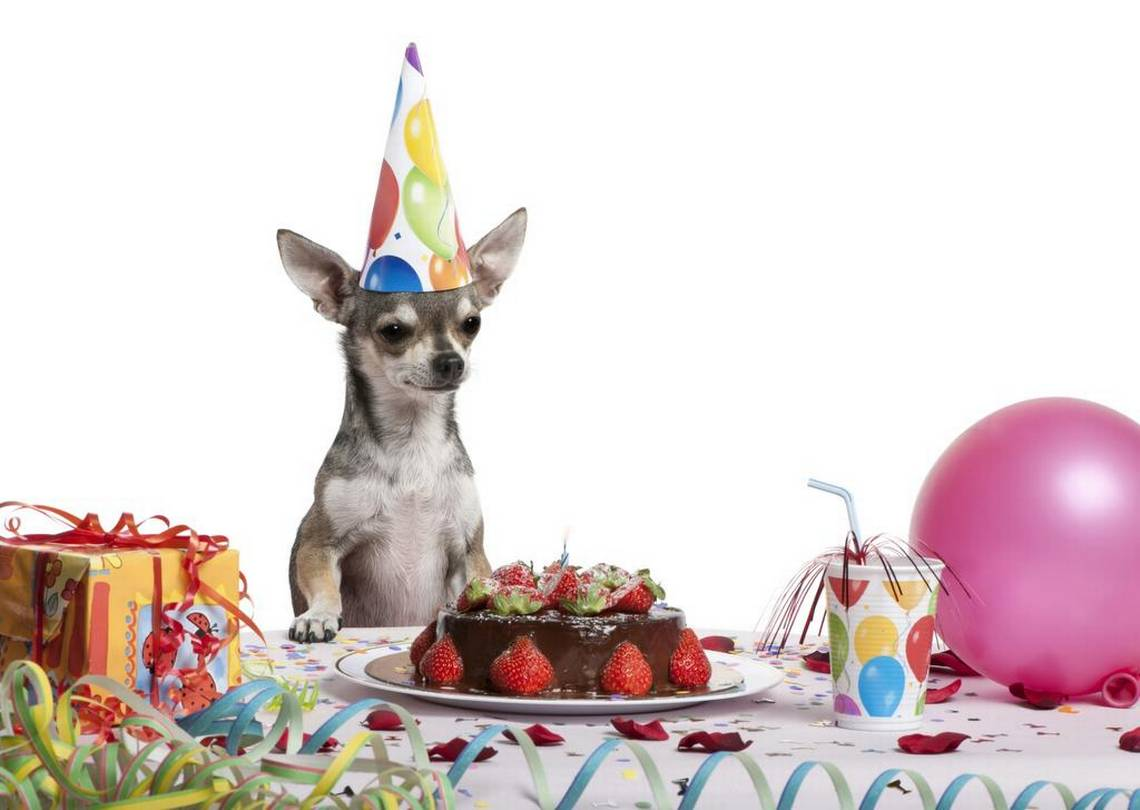8 Surprises for Your Pet's Birthday