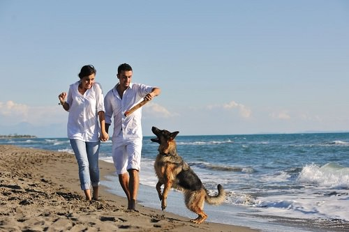6 Fun Activities You Can Do With Your Dog