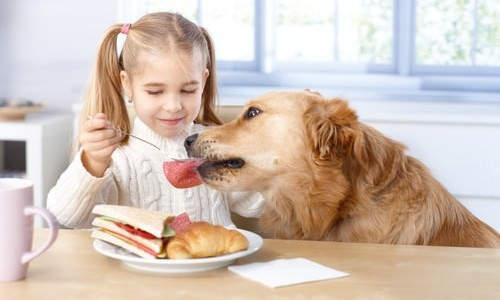 8 people foods your dog can eat too for Can my dog eat cooked fish