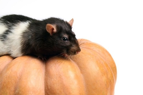 8 Common Halloween Dangers for Small Pets