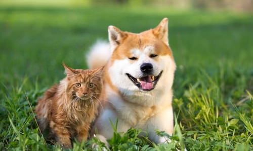 Scientific Reasons Why Dogs Are Better Than Cats