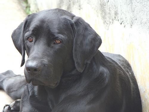 Tug-of-war causes dog aggression