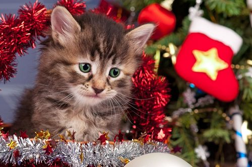 A new cat is not for Christmas