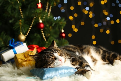 Christmas Safety Tips for Cats