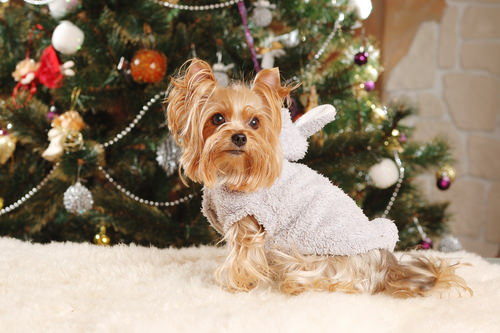 11 Christmas Safety Tips for Dogs