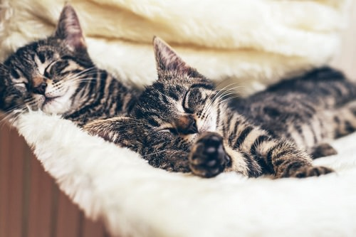 Fight Cat Odor in Your Home with These 7 Tricks