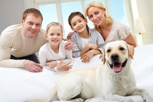 Adding a Pet to Your Household