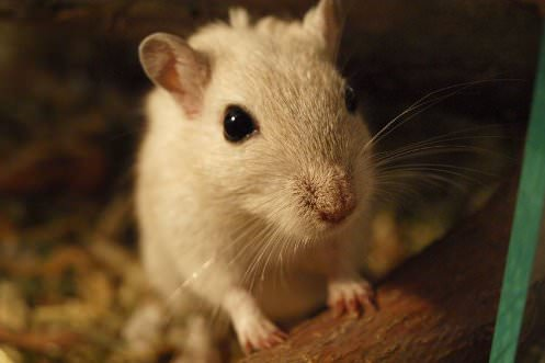 8 Best Foods for Gerbils