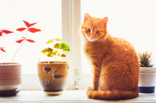 Plants to Keep Away from Pets