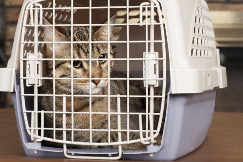 Prepare the kennel