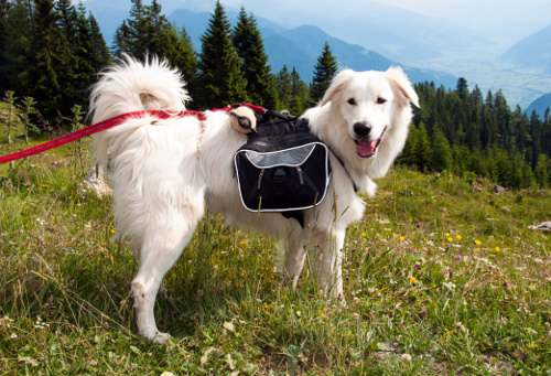 Purchase a Pet Rucksack for Hiking Trips