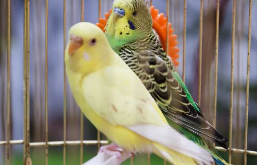 Residence Pet Restrictions