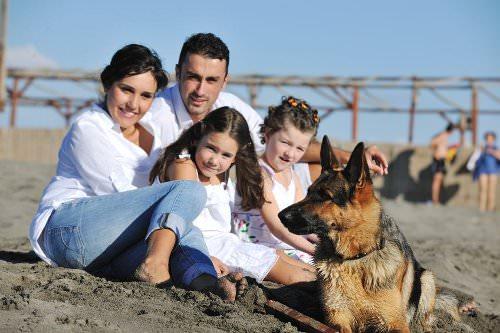 Seizure dogs