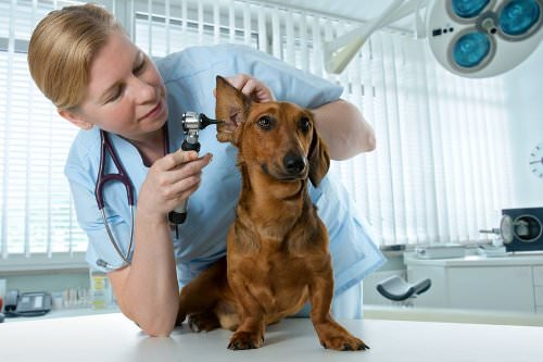 Take your pet for a checkup