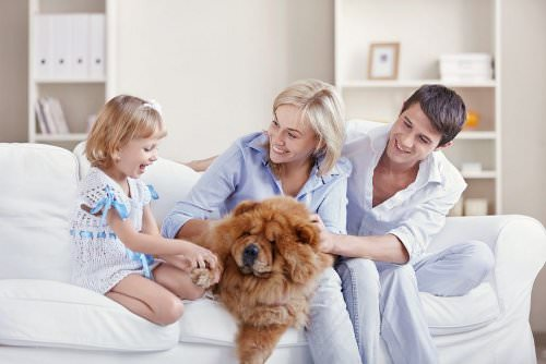 10 Things to Consider When Looking for a Pet