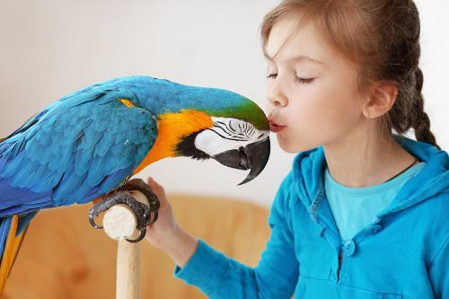 10 Things to Consider When Looking for a Parrot
