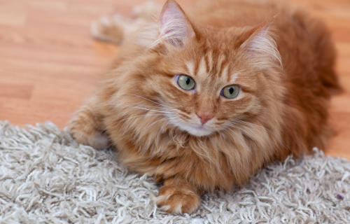 Things to Consider When Looking for a Cat