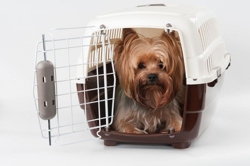 Tips for Traveling by Air with Pets