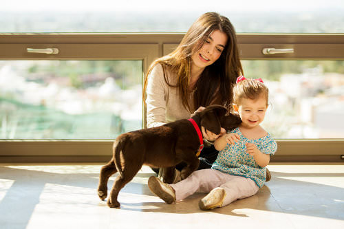 10 Tips for Bringing a New Puppy Home