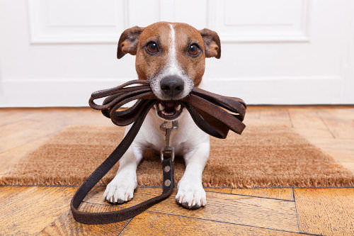 Hang up pegs for your pet