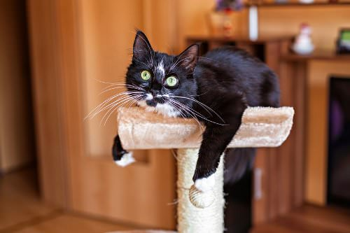 Raised Activity Centres for Cats