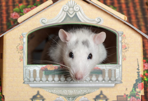 7 Rizzo Rat 10 Best Pet Names For Mice And Rats