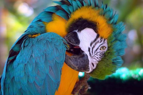 Tips for Teaching Your Pet Parrot to Talk