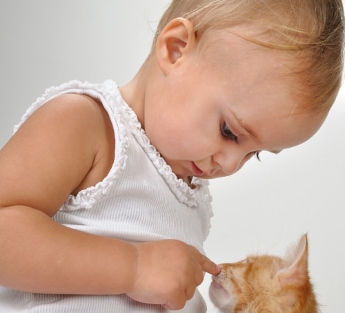 Ways to Prepare Your Cat to Meet Your New Baby