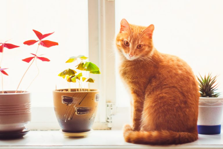 10 Plants to Keep Away from Pets