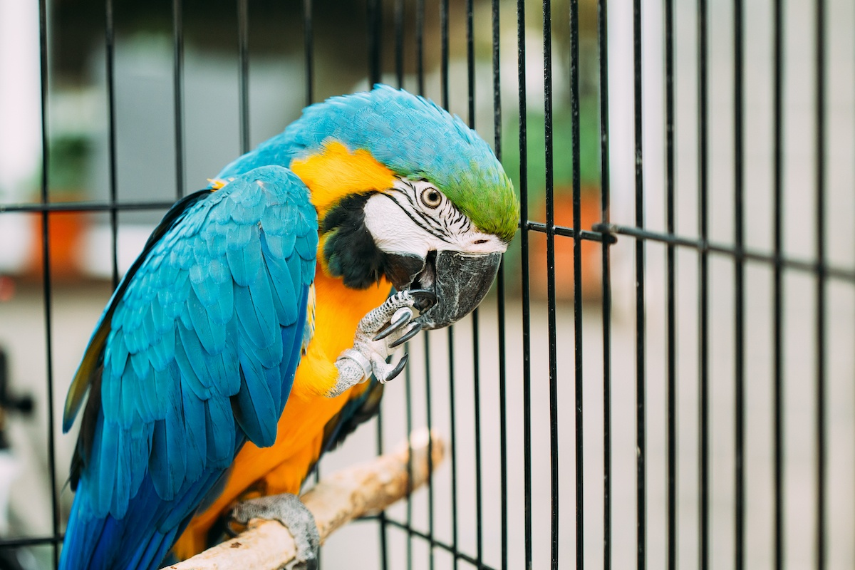 Tips for Teaching Your Parrot to Talk