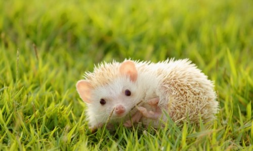 8 Incredible Facts About Hedgehogs