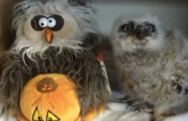 8 Fun Gifs That Show Our Pets Enjoy Halloween Too