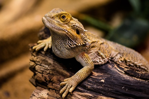 6 Essential Tips for Preparing Your Exotic Pet for an Emergency