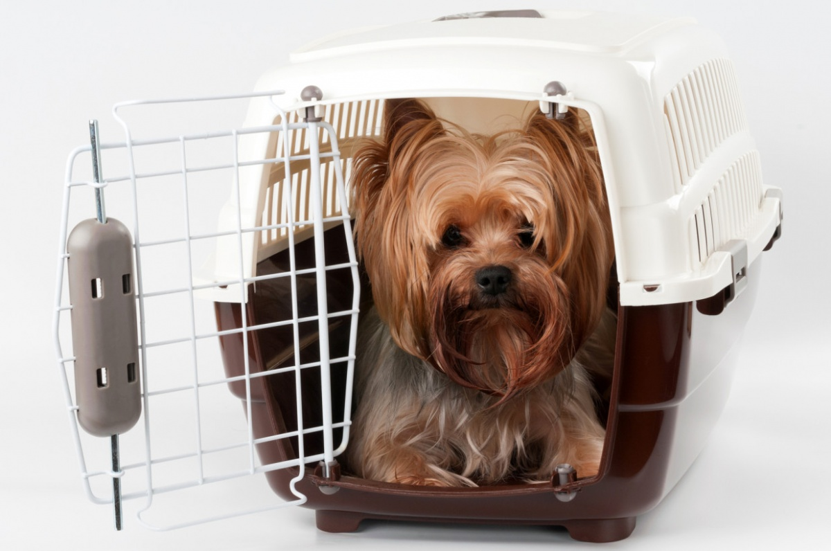 10 Tips for Traveling by Air with Pets
