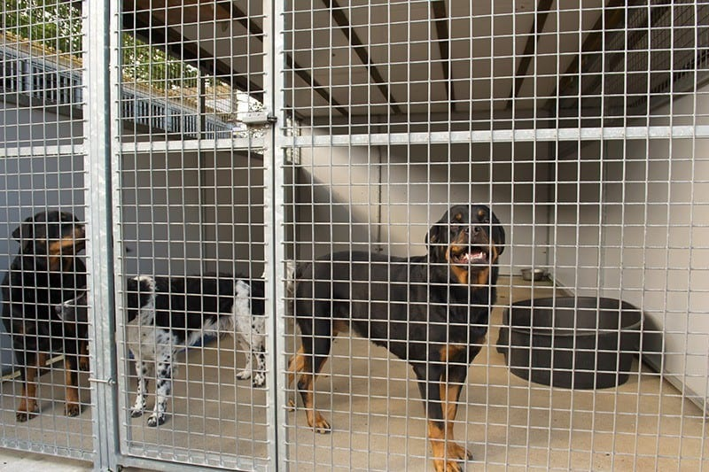 Helpful Tips for Finding a Lost Pet - Visit Animal Shelters