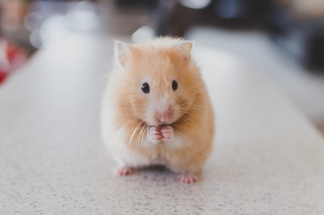 Reasons to Say No When Your Child Wants a Hamster