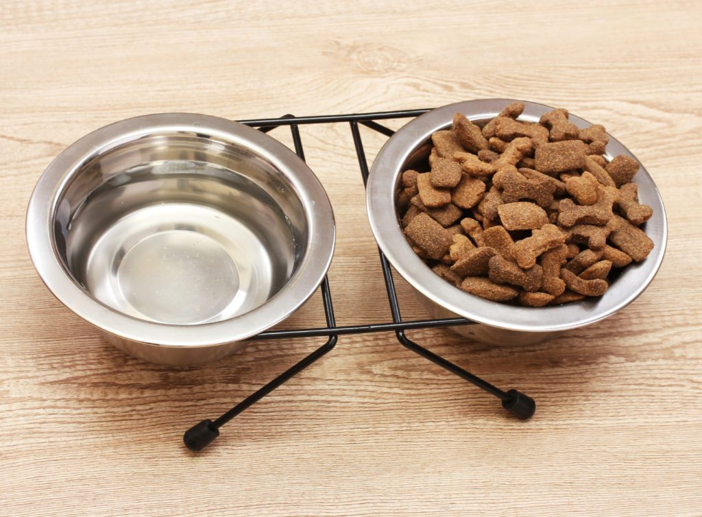 Things to Consider When Choosing Dog Food Decide on dry or wet