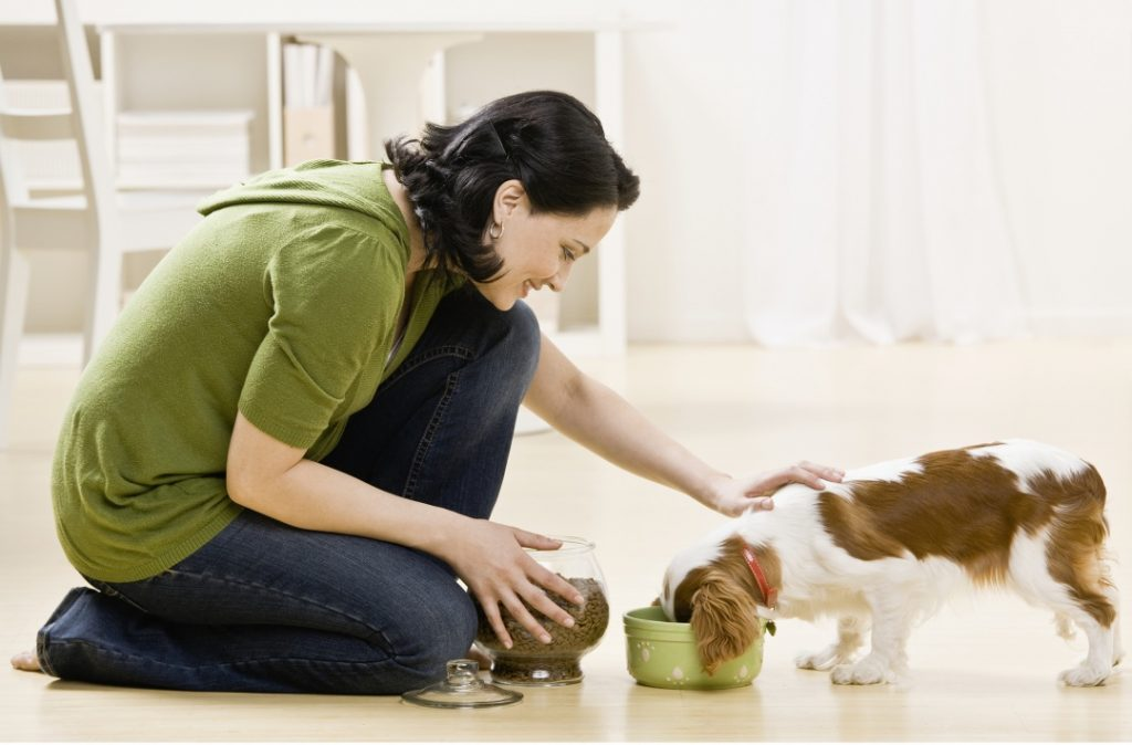 Things to Consider When Choosing Dog Food Understand the terminology
