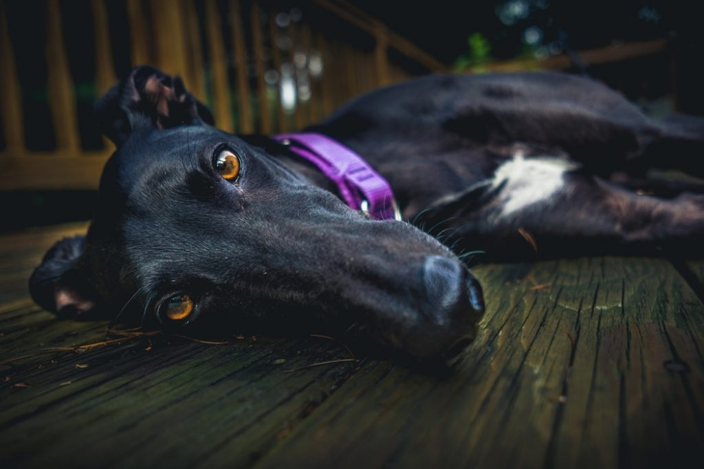 Things to Consider When Choosing Dog Food Watch for animal byproducts