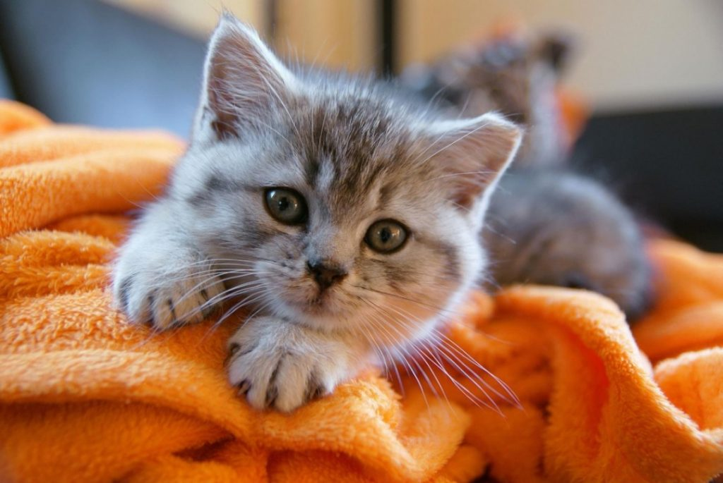 Ways to Prepare Your Cat for a New Baby - Alter Sleeping Arrangements