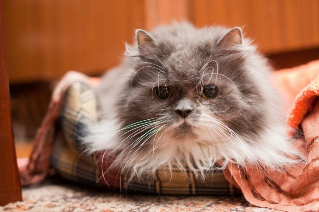 Ways to Prepare Your Cat for a New Baby - Build a Special Place