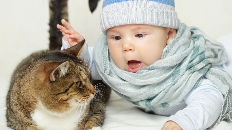 Ways to Prepare Your Cat for a New Baby - Ensure a Quiet Introduction
