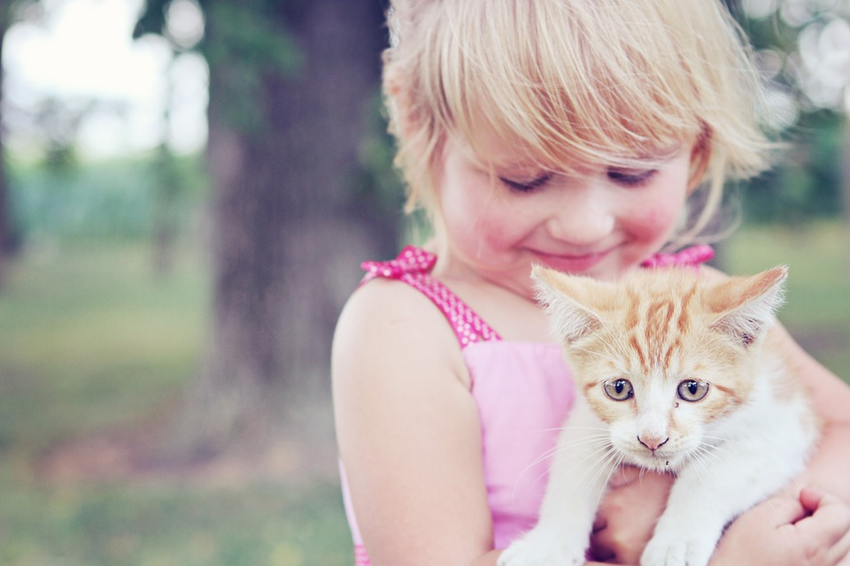 Ways to Prepare Your Cat for a New Baby - Restrict Access