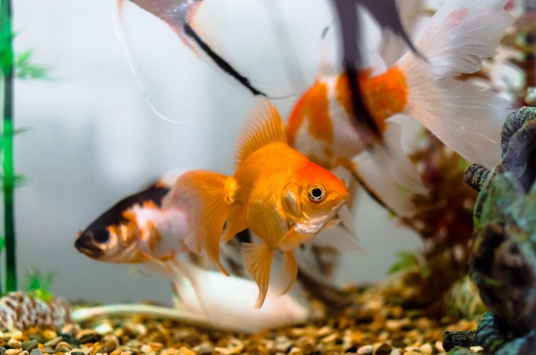 10 Aquarium Fish for Every Budget