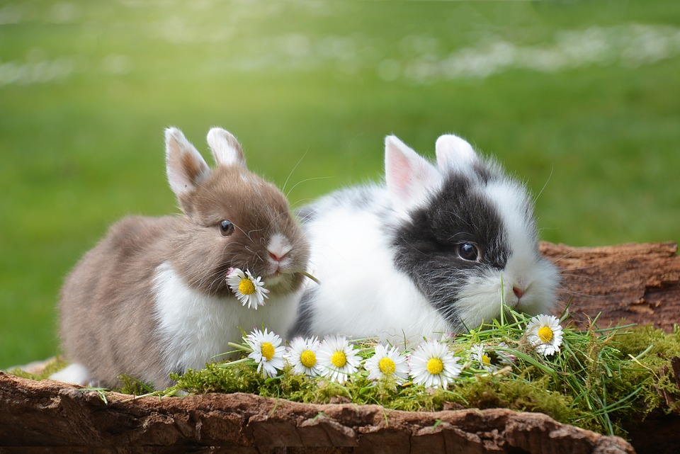 10 Most Beautiful Rabbit Breeds