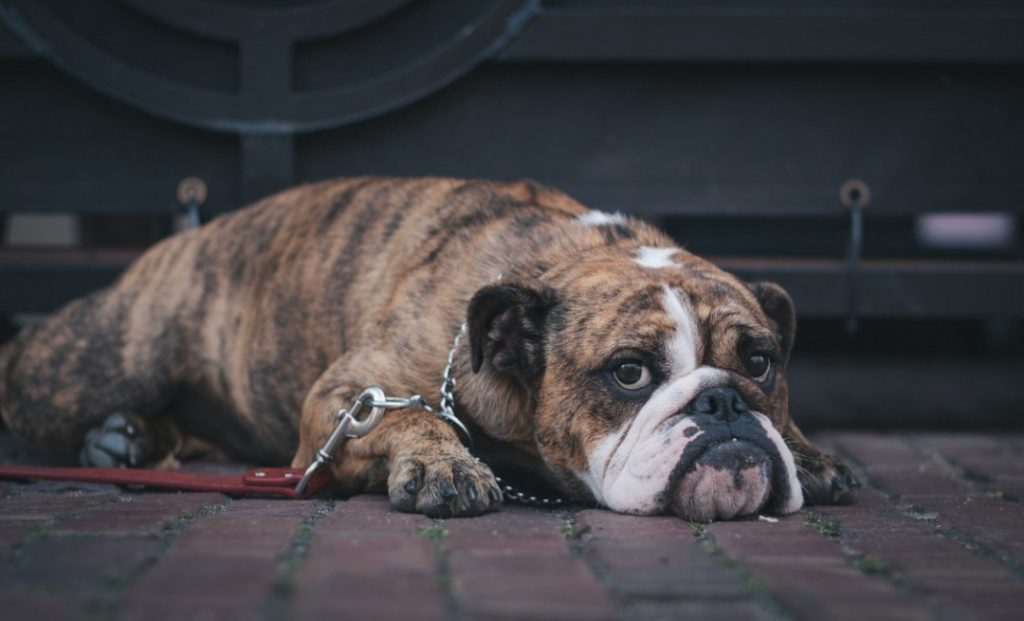 9 Reasons to Say No When Your Child Wants a Puppy